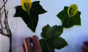 Making pictures from leaves with Georgia