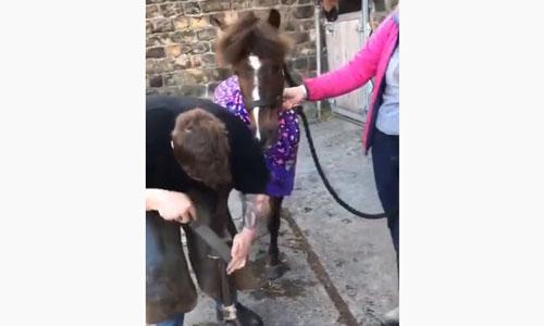 Pony pamper club
